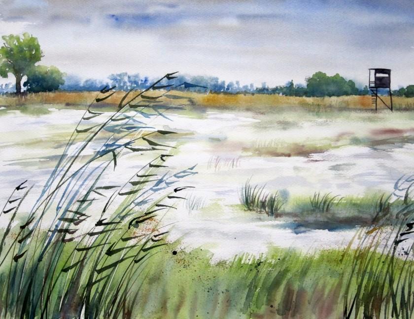 aquarellmalerei, in den elbwiesen